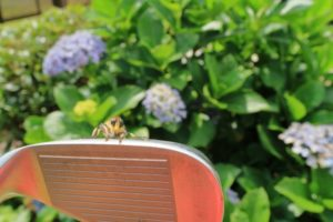 golf-insect-a