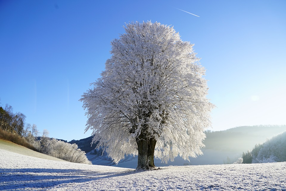 tree-snow-a